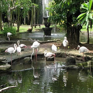 halaman-di-bali-bird-park-tour